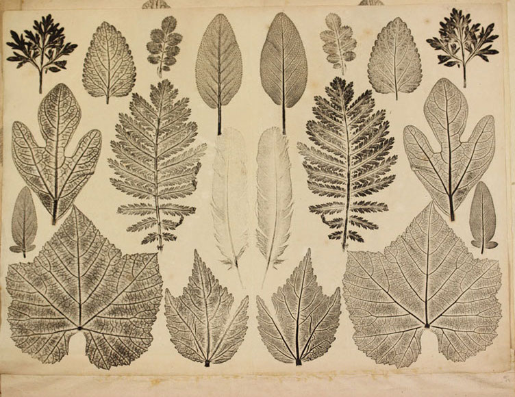 Printing of Philadelphia tree leaves made by Joseph Breintnall in the 1730's.